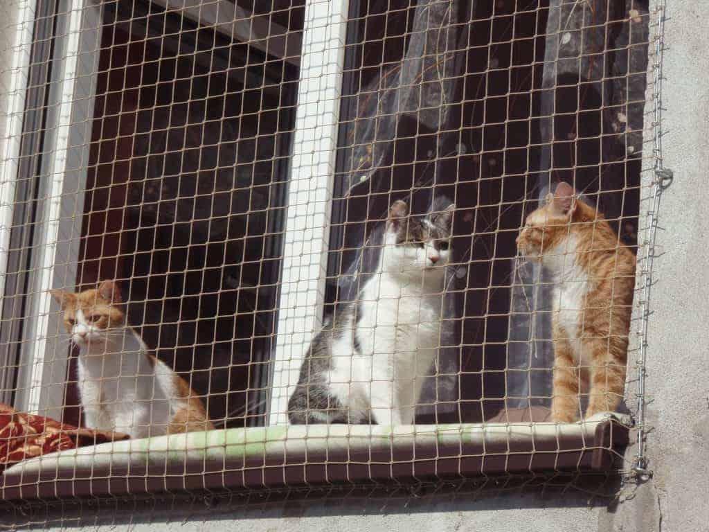 Siatka ochronna dla kotów