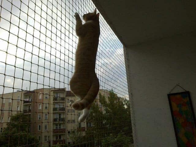 Siatka balkonowa dla kota