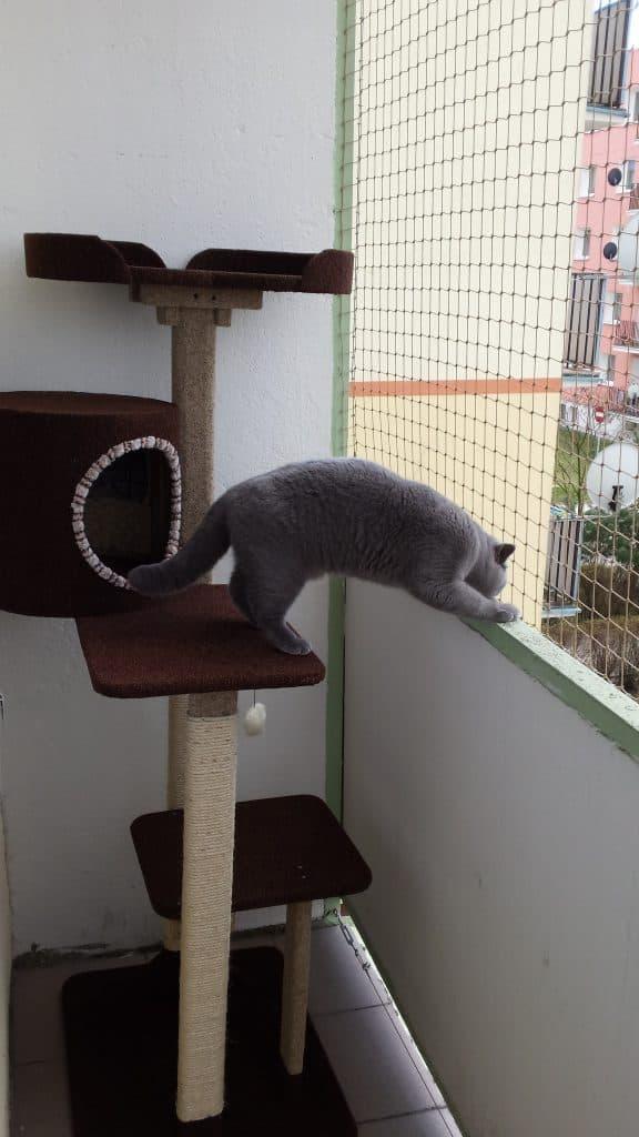 Kot bezpieczny na balkonie
