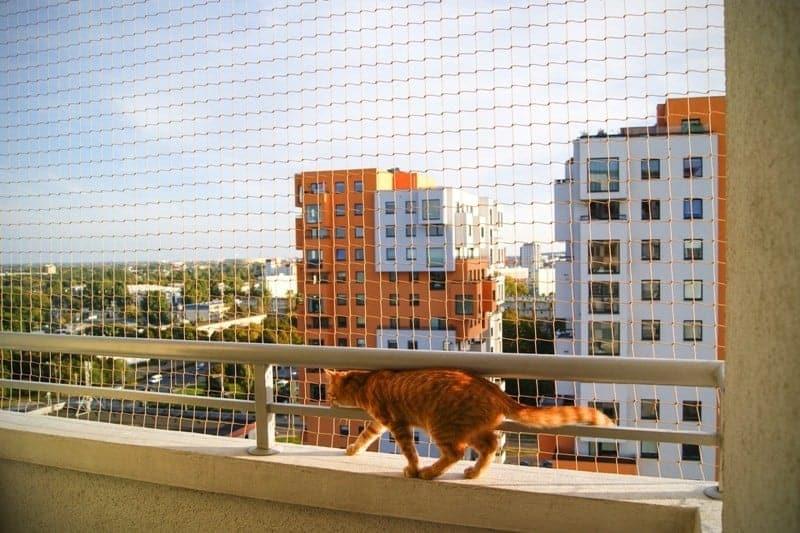Siatka balkonowa zabezpieczająca dla kota