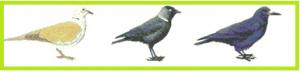 ptak-spike-b