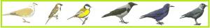 ptak-spike-c